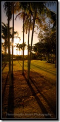 Darwin, Centennial Park, Park trees against the light