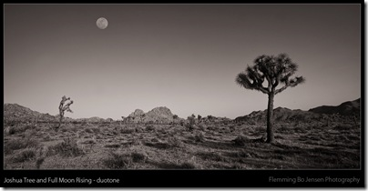 joshua tree full moon duotone - blog