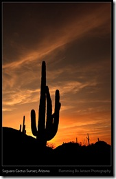 saguaro arizona - blog