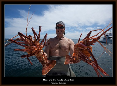 Rottnest-mark-crayfish