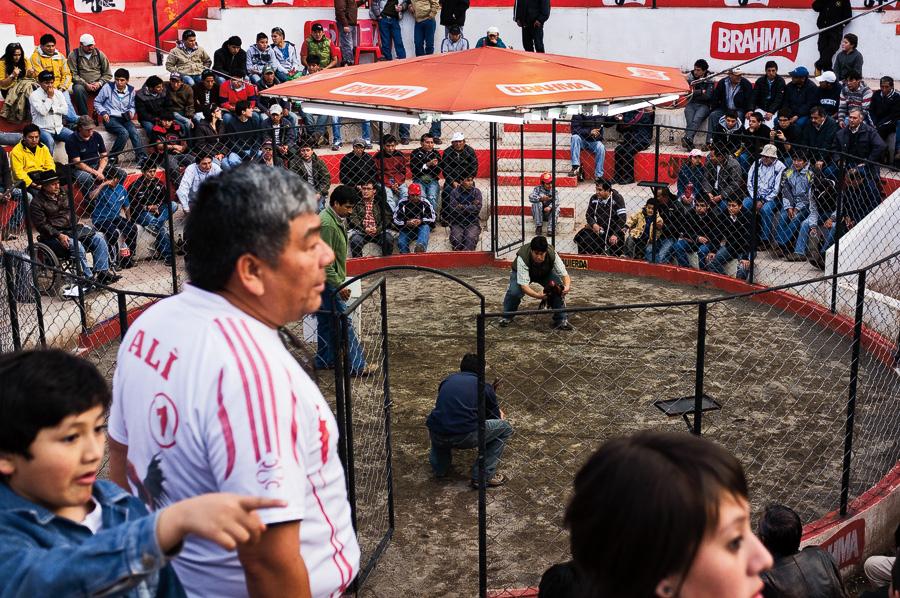 Cockfight, Cusco, Peru